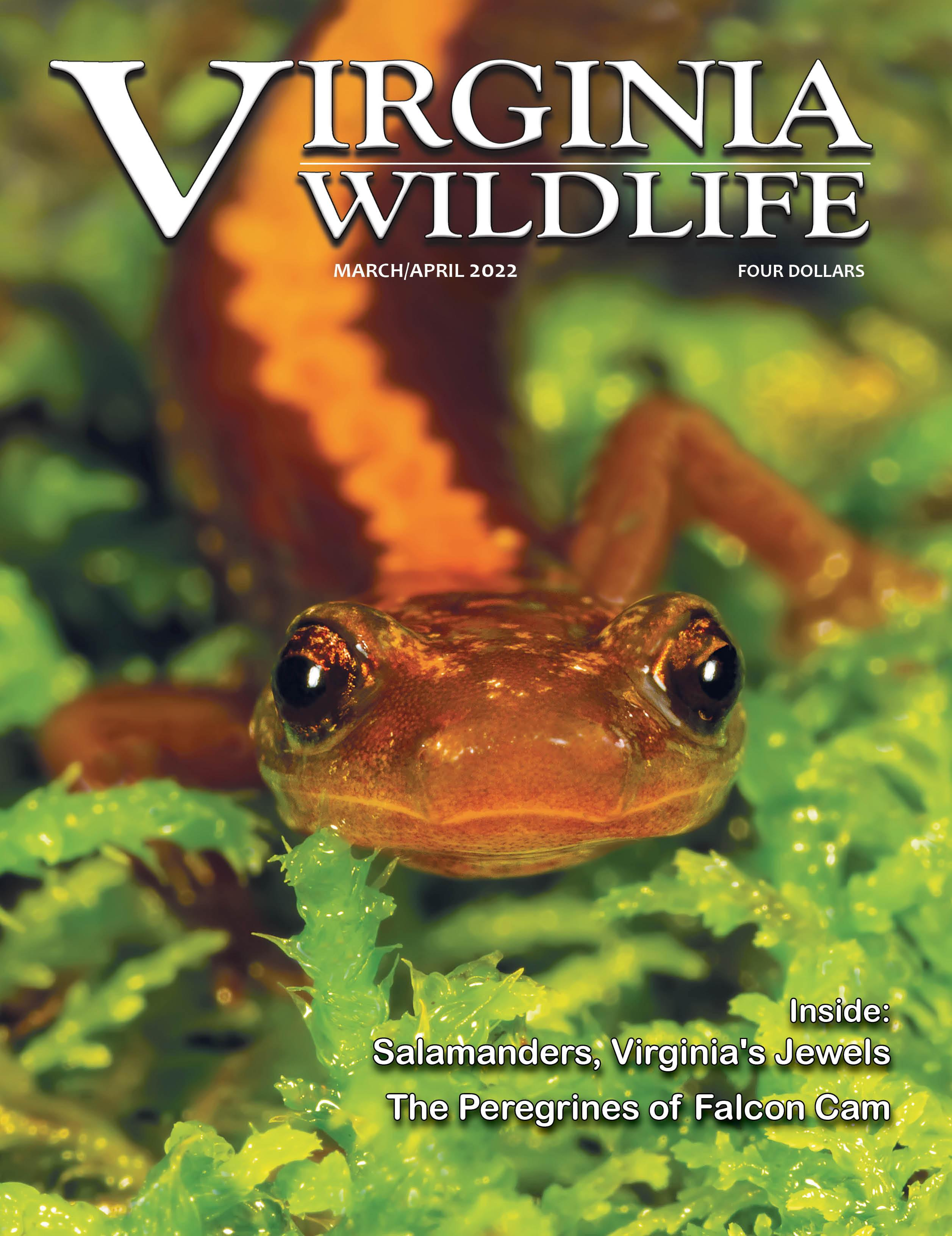 Virginia Wildlife Magazine